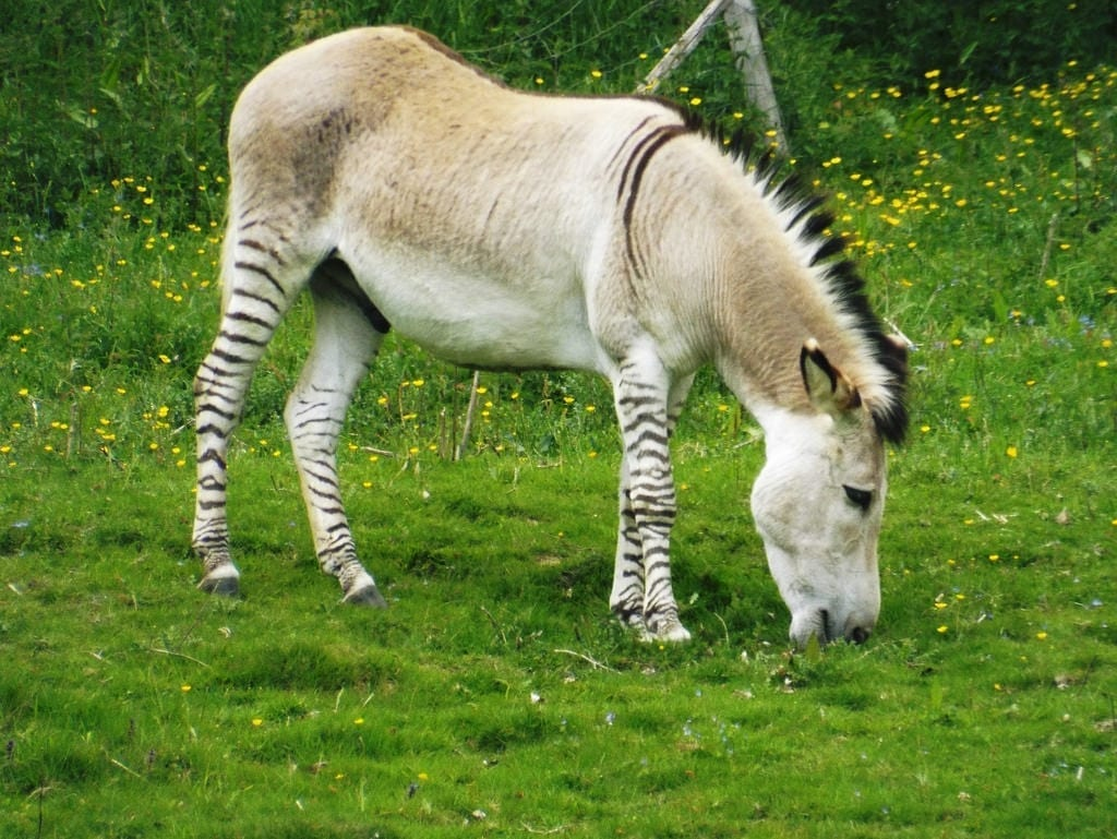 Interesting Facts About Donkeys
