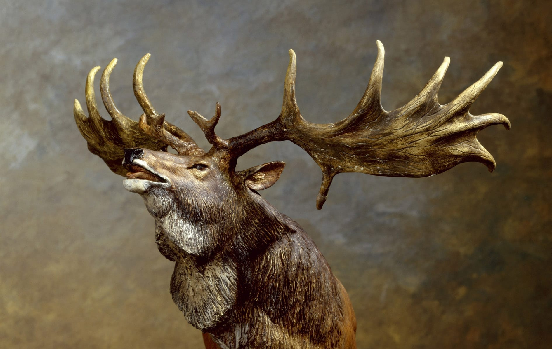 Irish Elk Facts Interesting Facts