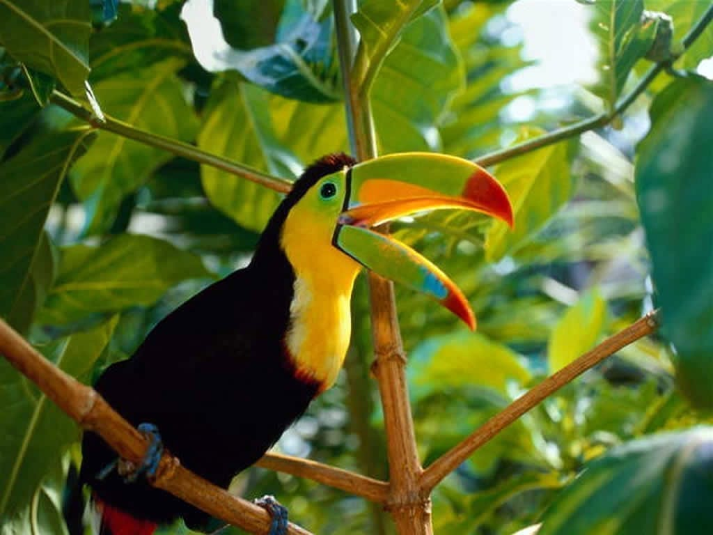 Toucan Facts – Interesting Facts