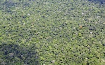 Facts About the Amazon rainforest That'll Blow Your Mind