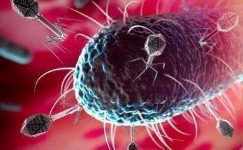 Bacteria Found Living Beneath Ocean Floor