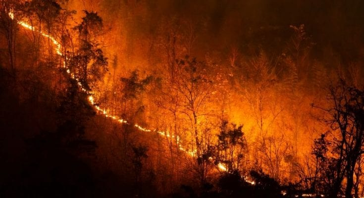 Surprising Facts About Wildfires