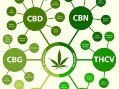 chemical composition of hemp