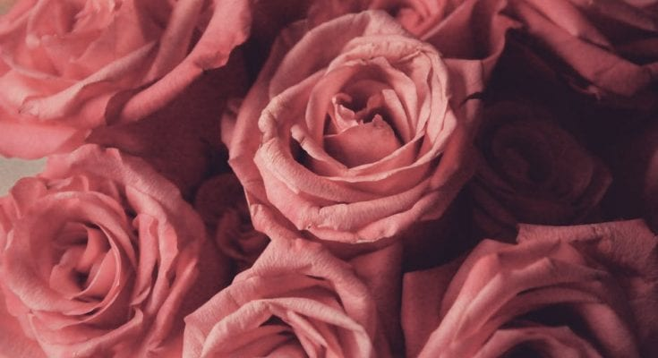 different rose colors